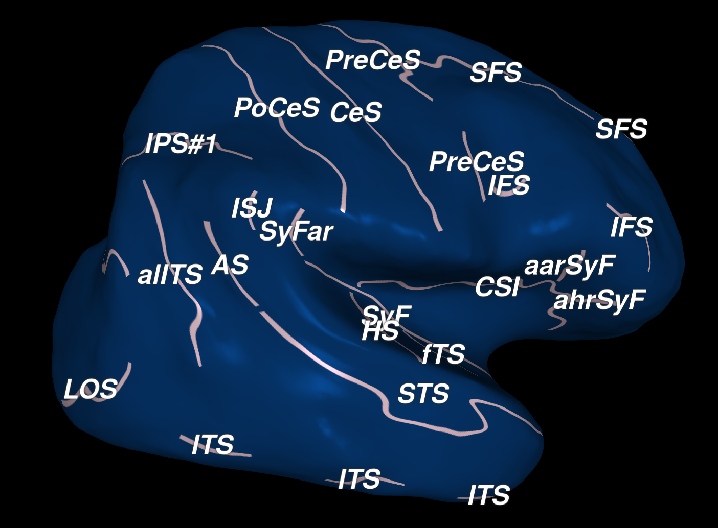 New cortical anatomy viewer available!